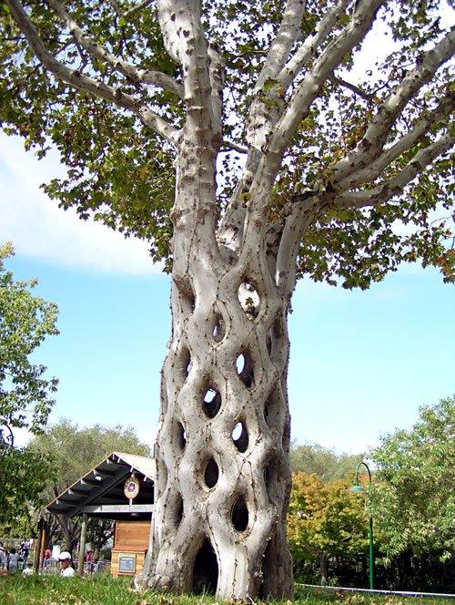 Бонсаи дерево в плошке
