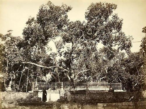 Примечательные деревья земли 36 фото